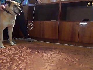 Follando Duro Perrito